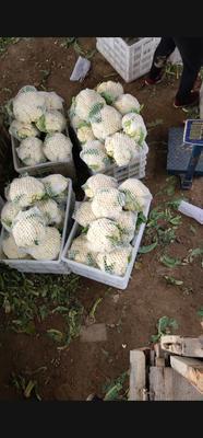 山东省德州市临邑县有机花菜 适中 3~4斤 乳白色