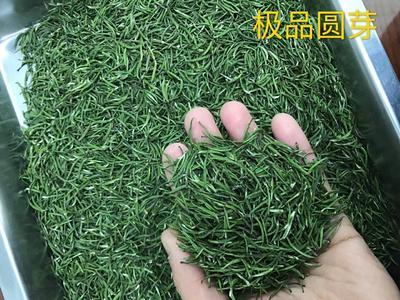 湖北省黄冈市英山县高山绿茶 袋装 特级
