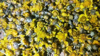 广西壮族自治区梧州市岑溪市野菊花 袋装 一级