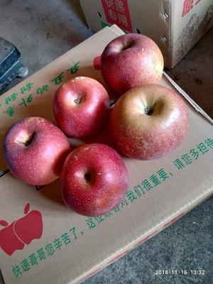 红富士苹果 光果 片红 80mm以上