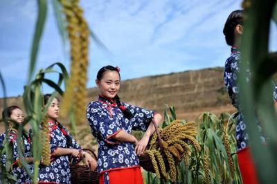 陕西省榆林市米脂县黄米 一级