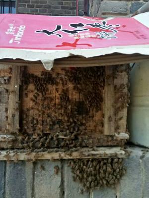 这是一张关于土蜂蜜 塑料瓶装 98% 2年以上的产品图片