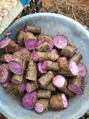 这是一张关于山药种子的产品图片