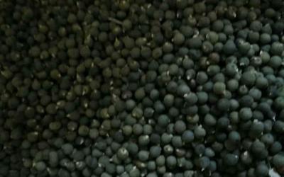 重庆九龙坡区卡里巴黄秋葵种子 常规良种
