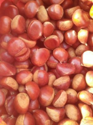 这是一张关于丹东板栗 一级 小粒的产品图片