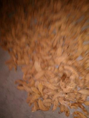 这是一张关于宁陕天麻的产品图片