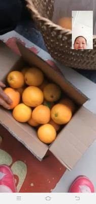 重庆万州区万州脐橙 85-90mm 4-8两