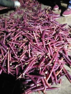这是一张关于满身红萝卜 0.2斤以下的产品图片