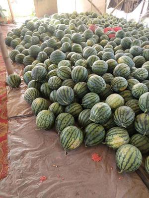 广东省汕尾市海丰县8424西瓜 有籽 1茬 9成熟 8斤打底