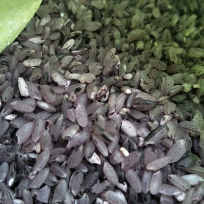 这是一张关于香米 一季稻 梗米 一等品的产品图片
