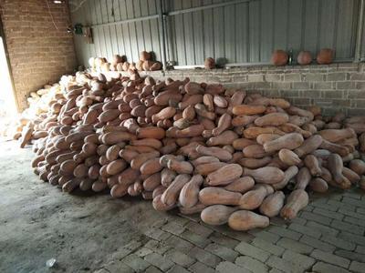 这是一张关于蜜本南瓜 4~6斤 其他的产品图片