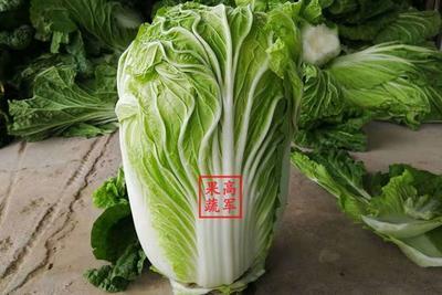 这是一张关于青杂三号白菜 6~10斤 二毛菜的产品图片