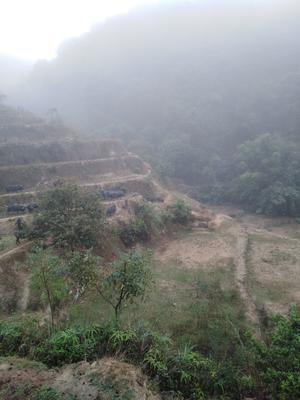 广西壮族自治区玉林市北流市环江猪 80斤以上