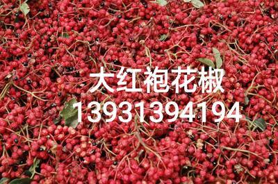 河北省保定市安国市大红袍花椒 干花椒 特级