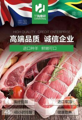 河北省张家口市宣化区羊肉卷 生肉
