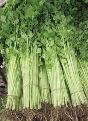 安徽省宿州市砀山县香芹 45~50cm 大棚种植 0.5斤以下
