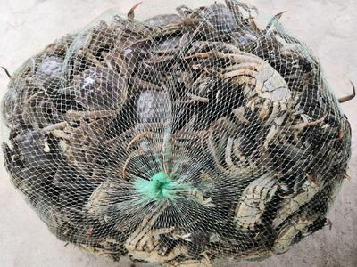 这是一张关于水阳螃蟹 1.0两 统货的产品图片