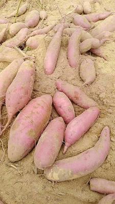 山东省青岛市黄岛区济薯26号红薯 红皮 混装通货