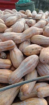 这是一张关于金韩蜜本南瓜 6~10斤 长条形的产品图片