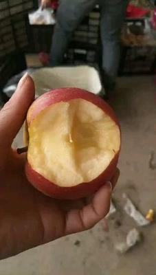 河南省商丘市虞城县红富士苹果 膜袋 条红 70mm以上