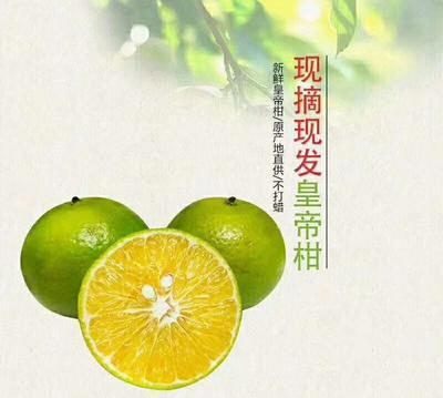 这是一张关于皇帝柑 3.5 - 4cm 2 - 3两的产品图片