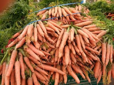 这是一张关于小顶胡萝卜 15cm以上 2两以上 3~4cm的产品图片