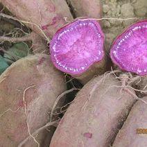 山东省烟台市福山区紫罗兰紫薯 混装通货