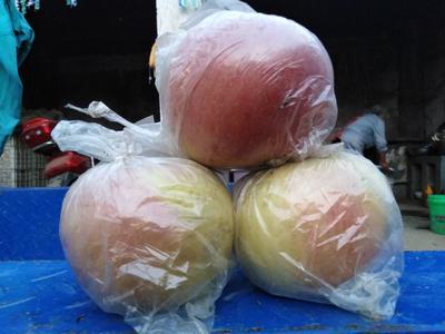河南省商丘市虞城县红富士苹果 膜袋 片红 75mm以上