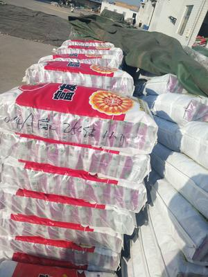 河南省郑州市惠济区玉米种子 ≥99% ≥99% ≥99.9% 常规种 ≤13%
