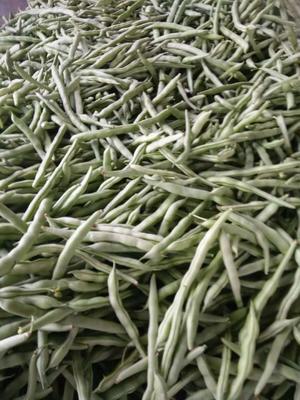 广西壮族自治区北海市合浦县长豇豆 50cm以上 不打冷