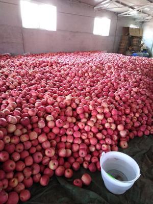 辽宁省葫芦岛市绥中县寒富苹果 纸袋 条红 80mm以上