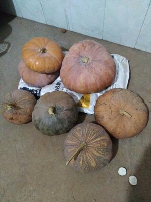 贵州省毕节市威宁彝族回族苗族自治县久红瑞甜瓜 2斤以上