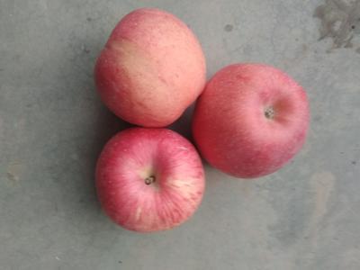 甘肃省平凉市庄浪县红富士苹果 纸袋 条红 75mm以上