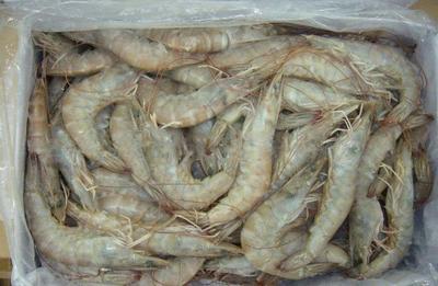 广西壮族自治区防城港市防城区越南对虾 野生 4-6钱