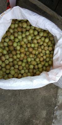 广东省汕尾市陆河县甜种 2cm以上