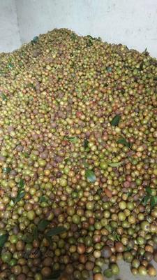 湖南省永州市冷水滩区茶叶籽油