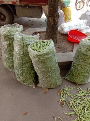 广西壮族自治区北海市合浦县白花四季豆
