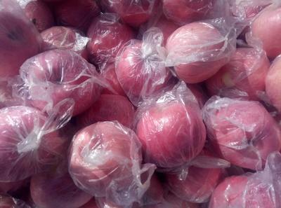 陕西省咸阳市礼泉县高原红苹果 膜袋 片红 70mm以上