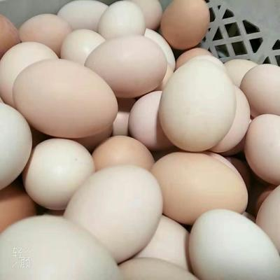 北京顺义区柴鸡蛋 食用 箱装