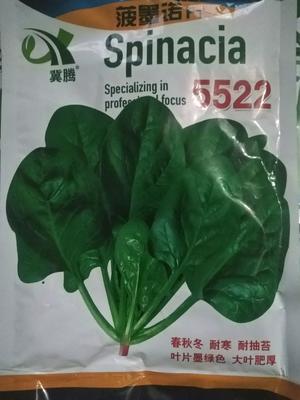 山东省济南市历城区黑圆大叶菠菜种子 袋装 ≥85% ≥95% 大田用种