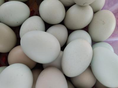 内蒙古自治区赤峰市松山区绿壳鸡蛋 孵化 箱装