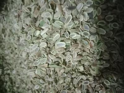 这是一张关于防风种子的产品图片