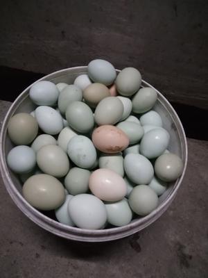 湖北省黄冈市麻城市土鸡蛋 食用 箱装