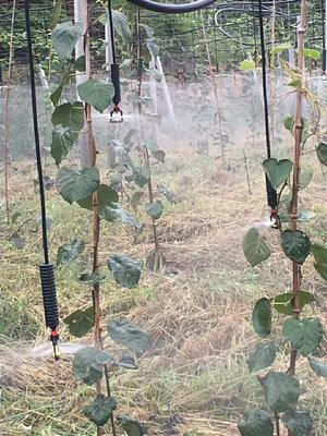 山东省菏泽市鄄城县猕猴桃专用滴灌