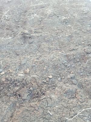 黑龙江省哈尔滨市道外区草炭土