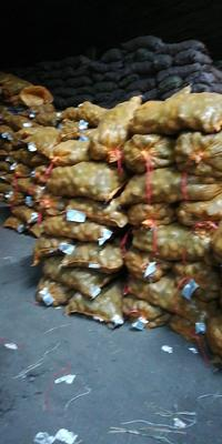 黑龙江省齐齐哈尔市克山县新佳2号土豆种子 一级原种