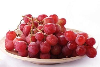 甘肃省张掖市山丹县红提 5%以下 1次果 1.5- 2斤