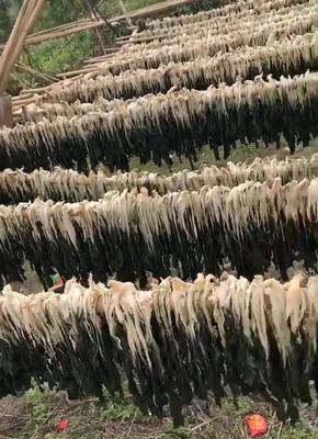 广东省清远市英德市白菜干 6-12个月