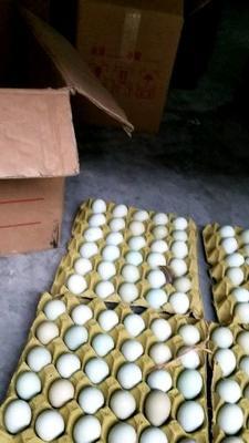 湖北省湖北省仙桃市绿壳鸡蛋 食用 箱装