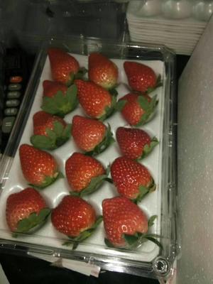 浙江省金华市婺城区宁玉草莓 20克以上